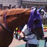 3歳馬近況とか(2017.5.26)